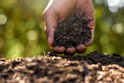 Loam in the hands of men for planting